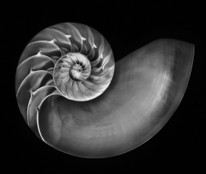 Nautilus-in-Black-and-White-1208